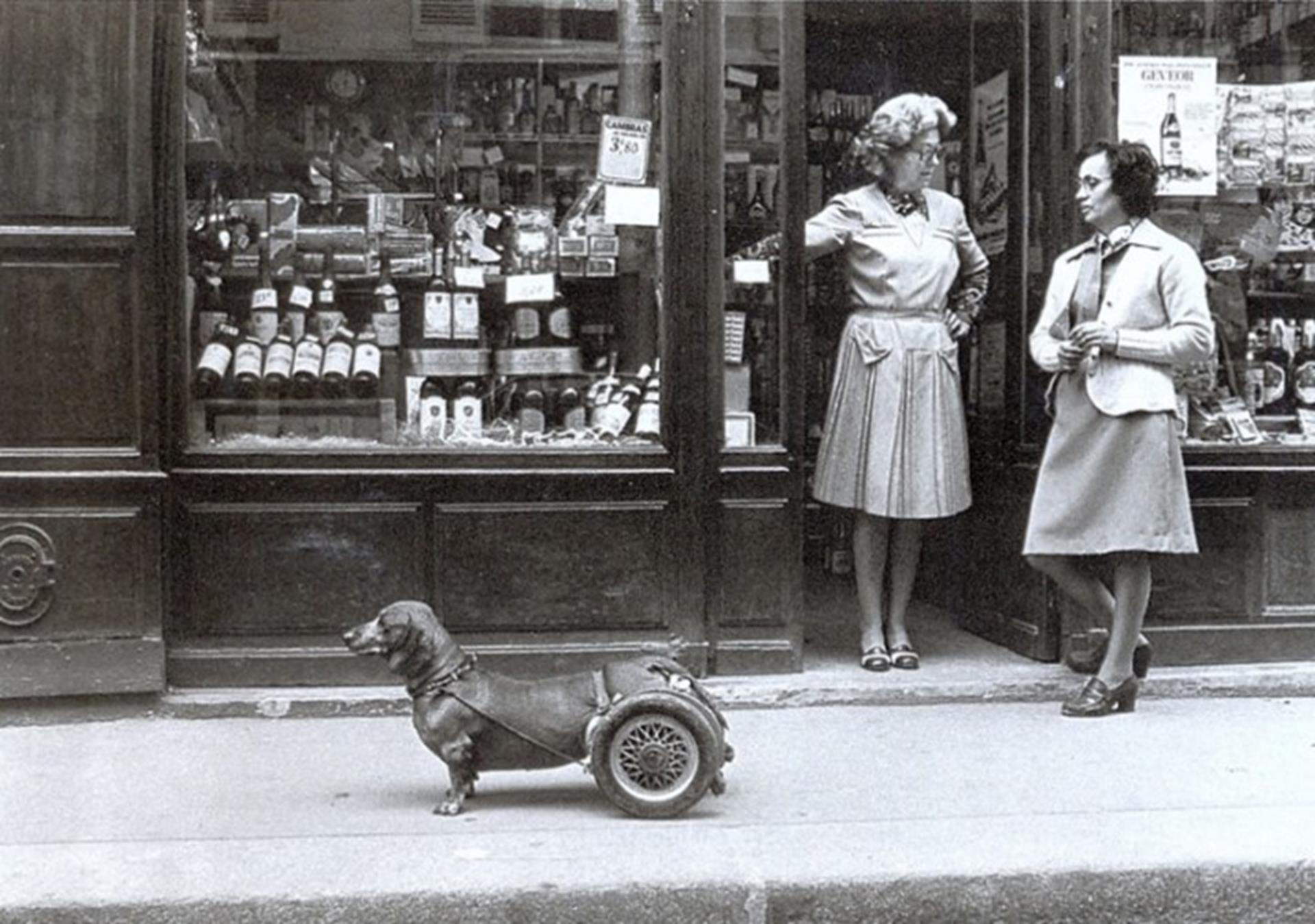 Robert Doisneau dog on wheels
