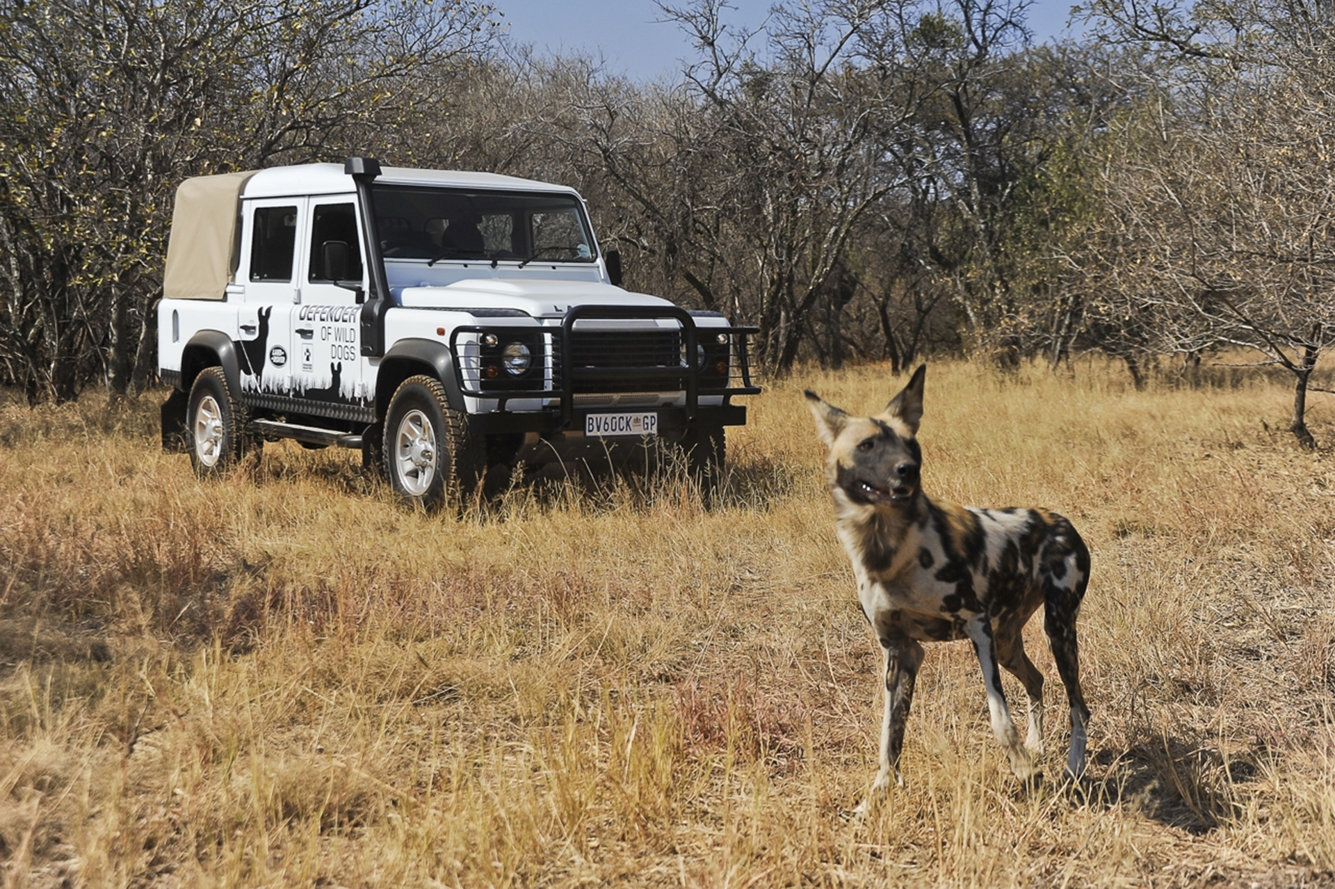 Land Rover Wild Dogs