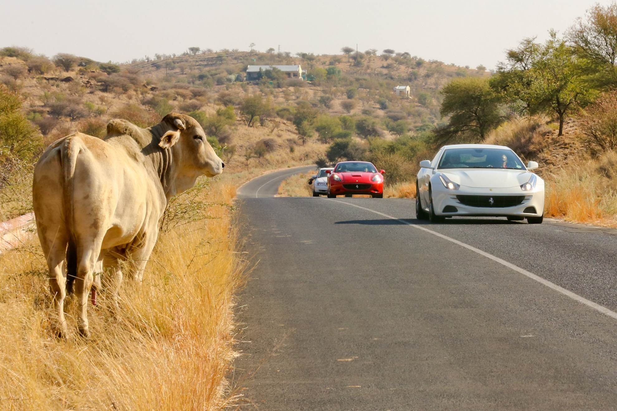 Suzuki Car Dealership >> First-ever exclusive Ferrari test drive event in Namibia